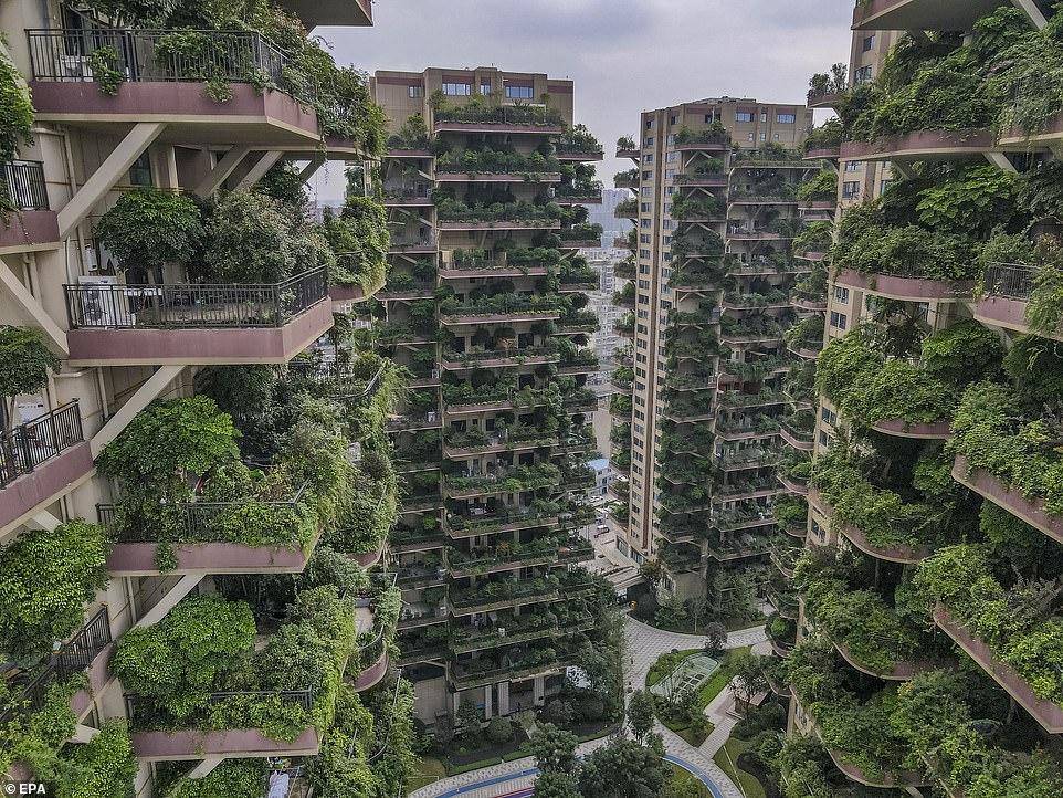 """Thành phố """"rừng thẳng đứng"""" độc đáo ở TQ hóa """"thành phố ma"""" - 1"""