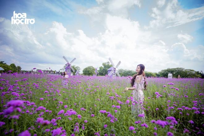 Giới trẻ Hà Nội rủ nhau check-in ở cánh đồng hoa oải hương rộng hàng chục nghìn mét vuông - 5