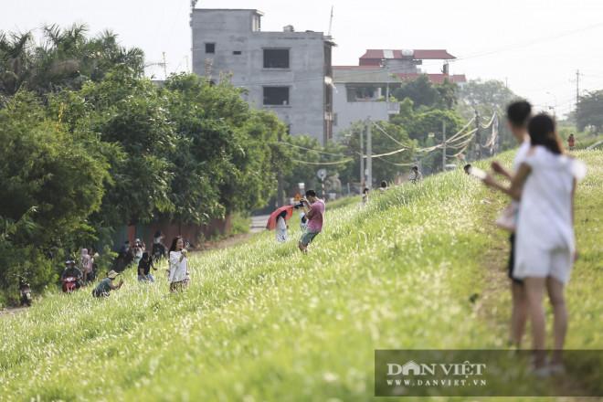 """Giới trẻ Hà thành """"phát sốt"""" với hàng triệu bông cỏ tranh trắng muốt ven sông Hồng - 1"""