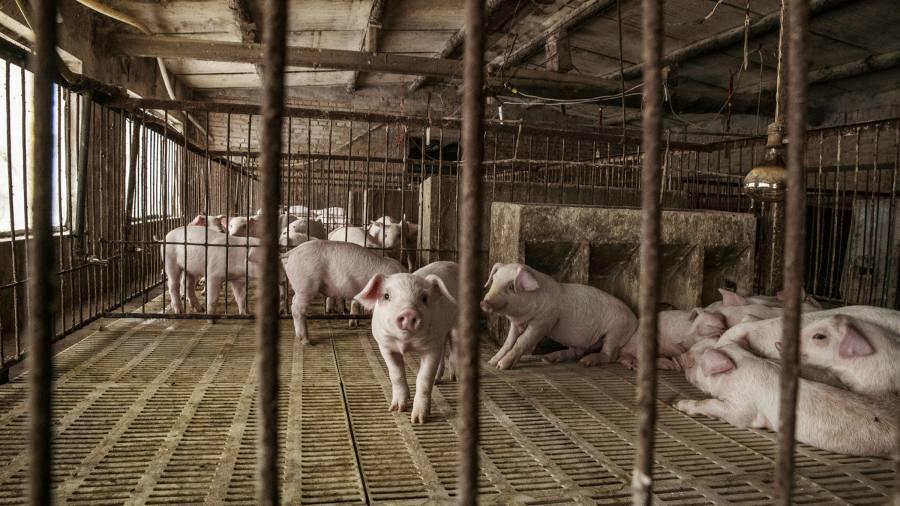 Kho dự trữ thịt lợn của Trung Quốc dần cạn kiệt giữa cơn bão giá liên tục leo thang - 1