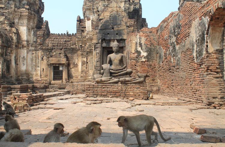 Lạ lùng khu tàn tích cổ trở thành thánh địa loài khỉ, phải luôn cảnh giác khỏi bị khỉ cướp đồ - 1