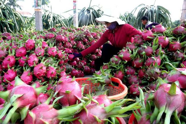 Hoa quả Việt xuất sang Trung Quốc: Nhiều tiềm năng còn bỏ ngỏ - 1