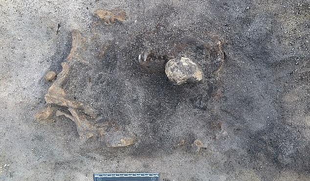Bí ẩn hài cốt không phải con người nằm lẫn trong khu mộ cổ 8.400 năm - 1