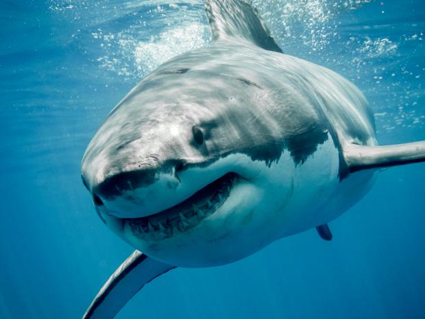 Nửa triệu cá mập sẽ bị tàn sát để có đủ vaccine Covid-19 cho con người? - 1