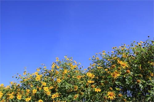 Đà Lạt lãng mạn mùa dã quỳ, Du lịch, Da Lat, hoa da quy, hoa Da Lat, du lich, du khach, Da Lat mua hoa da quy, diem du lich, tin tuc