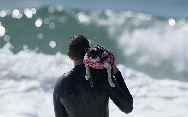 Chủ nhân của các chú chó cũng luôn theo sát các con vật cưng của mình