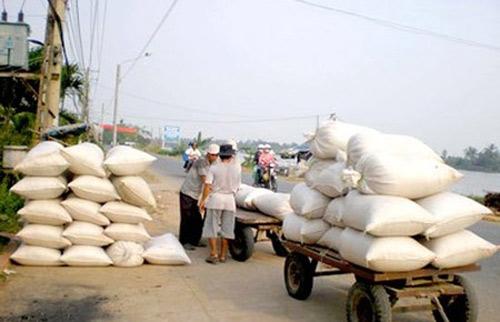 Giá lúa gạo tiếp tục đi xuống - 1