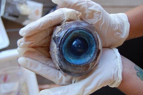 Con mắt khổng lồ trôi dạt vào bờ biển - 1
