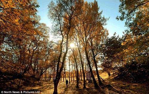 Vẻ đẹp hoang sơ của mùa thu nước Anh - 1