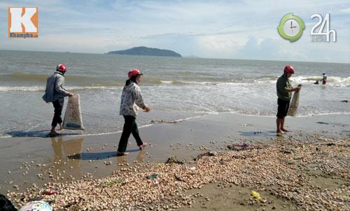 Ra biển... hốt sò! - 1
