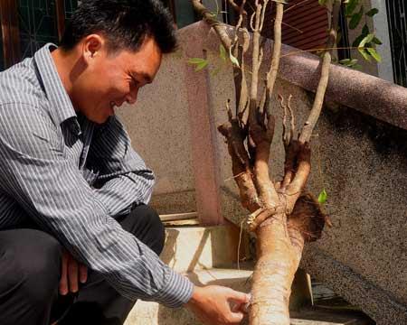 Đổ xô vào rừng đào rễ cây mật nhân - 1