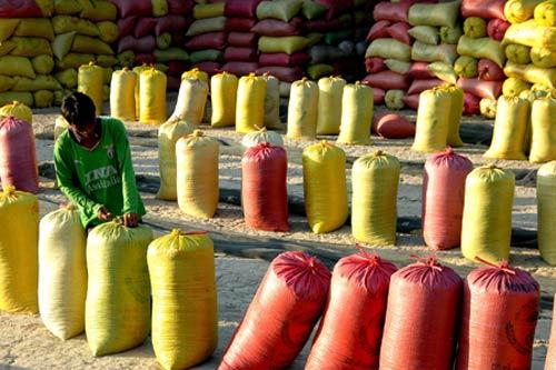 Nông dân kêu khó tạm trữ lúa gạo - 1