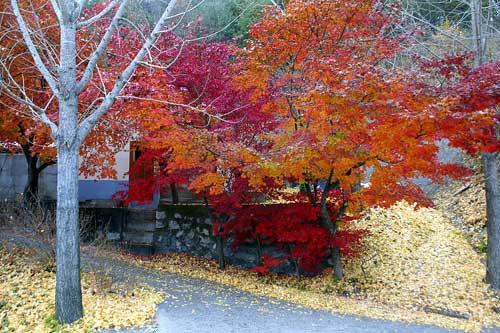 Hàn Quốc mùa lá đỏ - 1