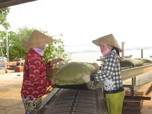Đầu năm 2013: Lo gạo ế - 1