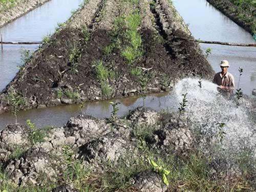 Nông dân lại ồ ạt bỏ lúa trồng cam sành - 1