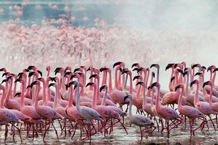 Sững sờ trước vẻ đẹp của hồ hồng hạc - 1