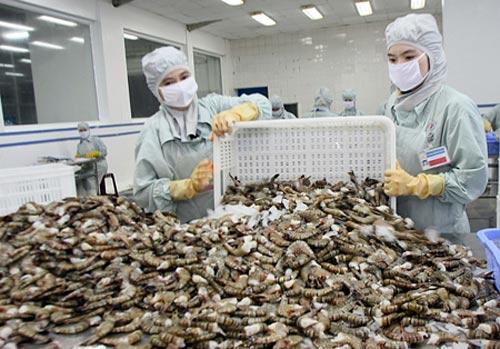 Khó bỏ 'chất cấm' trong tôm xuất khẩu - 1