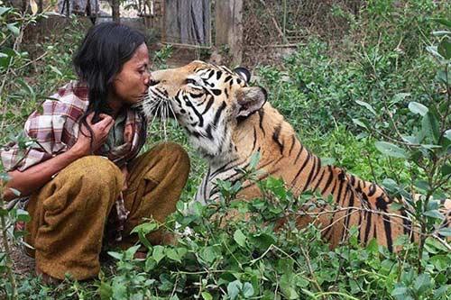 Làm bạn với hổ dữ nặng 172 kg - 1