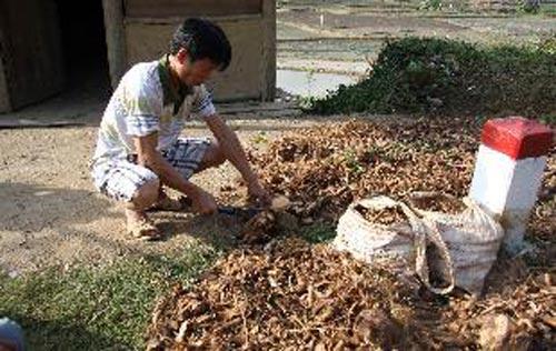 Trung Quốc thu mua rễ cây để làm gì? - 1
