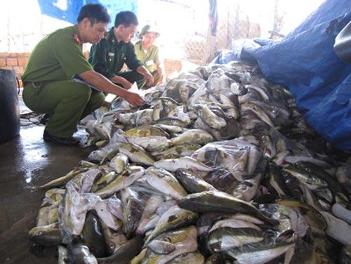 Quảng Ngãi: Tiêu hủy 1,5 tấn cá nóc - 1