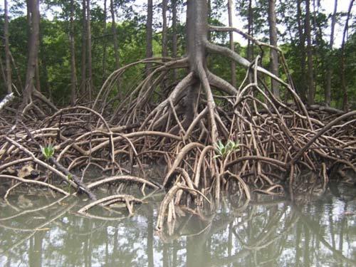 Ngao du khắp chốn ở rừng già Amazon (Phần 2) - 1