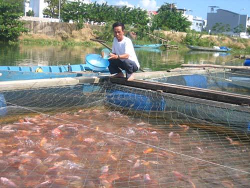 Đắng lòng vì 'lệnh' cấm nuôi cá trên sông - 1
