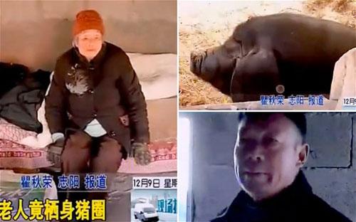 TQ: Ép mẹ 100 tuổi vào chuồng lợn sống - 1