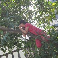 HN: Cả phố hỗn loạn vì 2 phụ nữ vắt vẻo trên cây