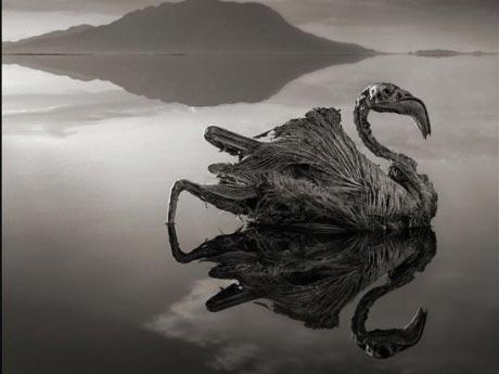 'Hồ độc' biến động vật thành đá - 1