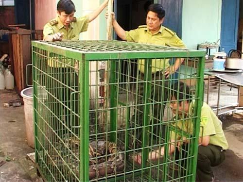 Huế: Bắt được trăn nặng gần 50 kg - 1