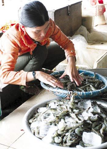 Bảo quản hải sản bằng urê: Hại gan thận - 1
