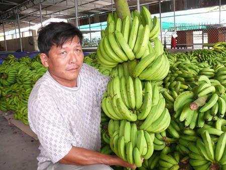 Xuất khẩu rau củ quả cuối năm 2013: Nhiều tiềm năng - 1