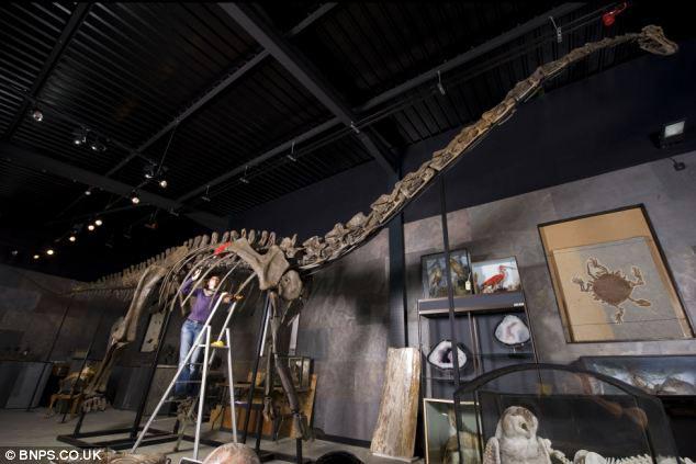 Video: Bán xương khủng long hơn 20 tỷ - 1