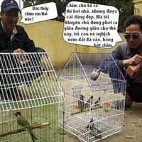 Kinh nghiệm nuôi... chim
