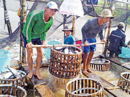 'Vỡ trận' ngành cá tra - 1