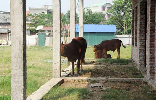 Hà Nội: Trường mầm non tiền tỉ bị bỏ hoang - 1