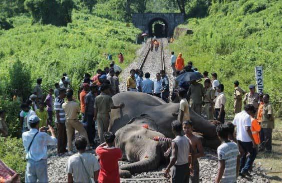 Ấn Độ: Bị tàu hỏa đâm, 7 voi rừng chết thảm - 1