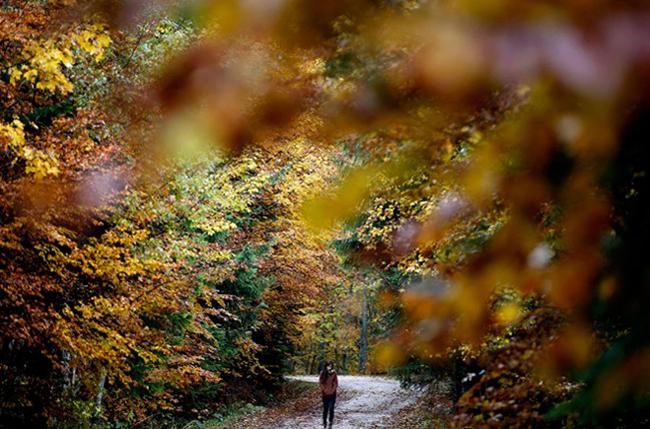 Một cô gái dạo bước trong khu rừng thuộc làng Tovariste gần Fojinica, Bosnia và Herzegovina vào một ngày mùa thu.