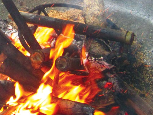 Bắp chuối rừng lam cá suối - 1