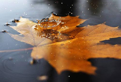 Thơ tình: Chiếc lá cuối mùa thu - 1