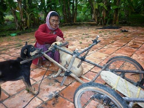 Bà lão 78 tuổi và cỗ xe chó kéo - 1