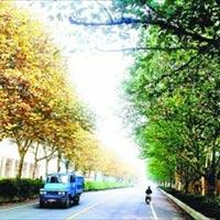 Hàng cây hai mùa kỳ lạ ở Trung Quốc