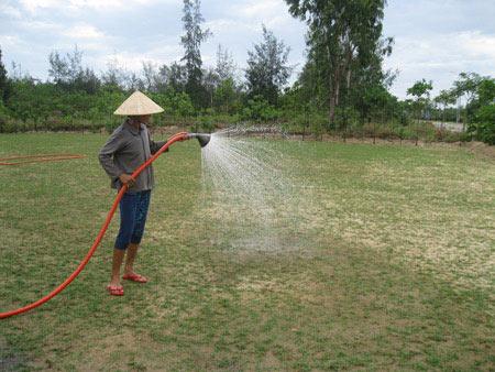 Quảng Nam: Ngư dân lên bờ... trồng cỏ - 1