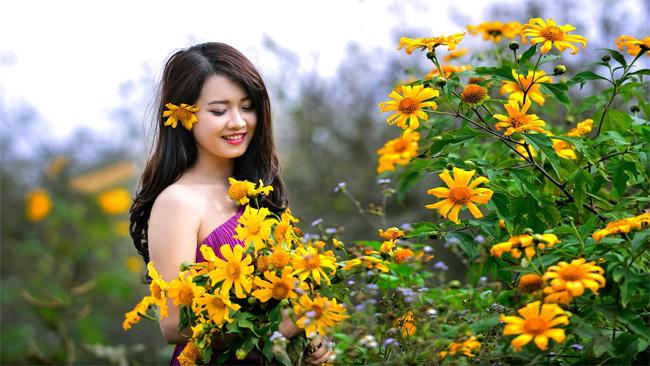 Đặc biệt, vào mùa này, hoa dã quỳ nở vàng ươm khắp các cánh đồng Mộc Châu