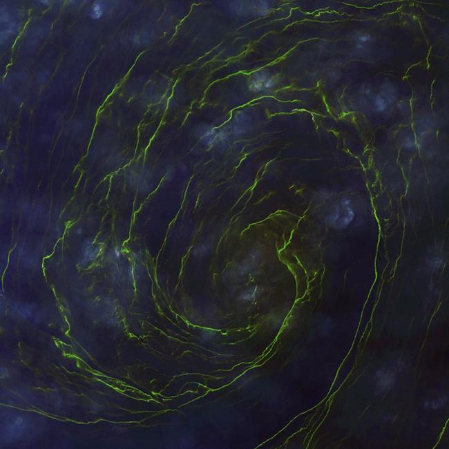 Thủy triều xanh trên vùng biển phía đông Oman. Ảnh: DigitalGlobe.
