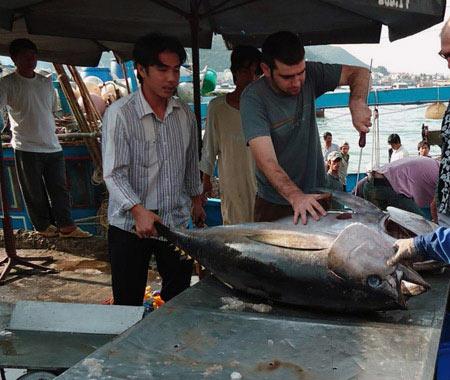 Xuất khẩu cá ngừ tăng trưởng... âm - 1