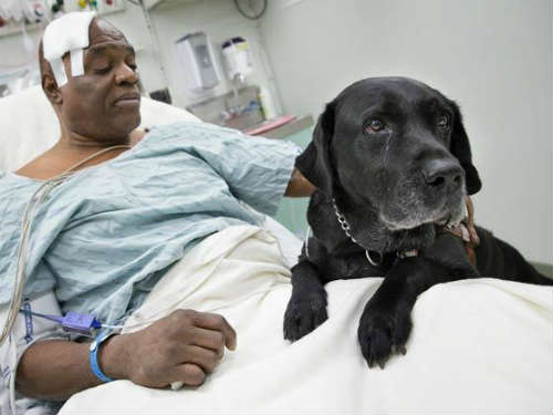 Chó nhảy xuống đường ray cứu người chủ mù - 1