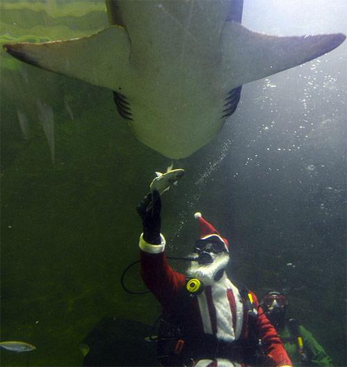 Ông già Noel chơi cùng cá mập - 1