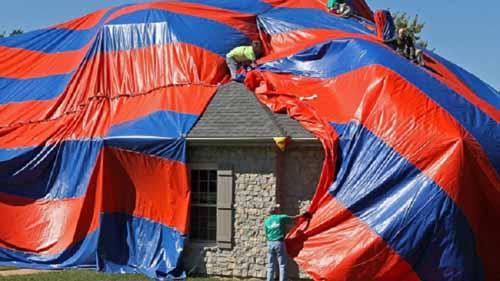 Kinh dị ngôi nhà bị nhện độc xâm chiếm - 1