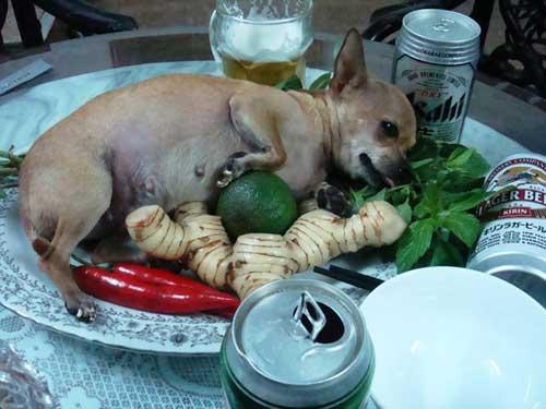 Liên khúc cười: Ẩm thực, nhà hàng - 1